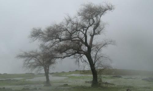 Rain and Trees